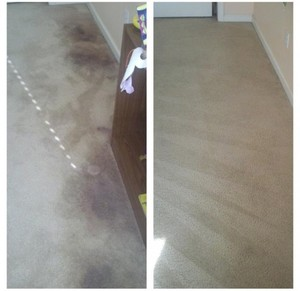 Carpet Cleaning Cleanup Man
