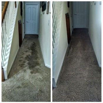Carpet with coffee stain